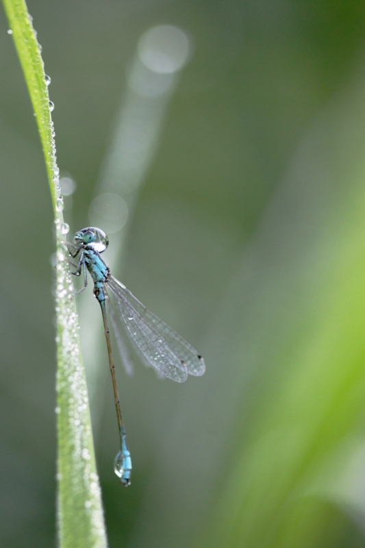 2013Agrion0008