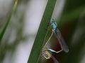 2013Agrion0006